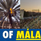 Book Malaga football tickets